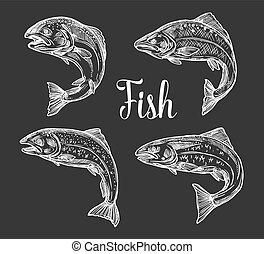truite, croquis, saumon, fish