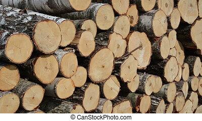 truncated tree log close - Closeup of truncated tree trunk...