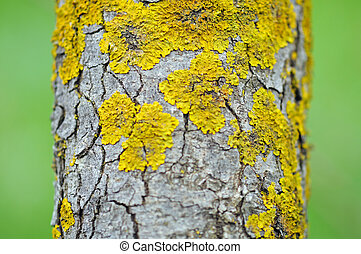 trunk macro