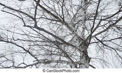 trunk of a birch in the winter dry branches of a tree the nature a landscape outdoors Russia