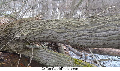 Trunk of a fallen tree in the forest