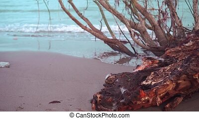 Trunk of a tree on the sea beach with a beautiful blue water