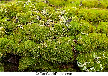 Trunk of a tree with moss