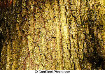 Trunk of an old tree with very interesting structure. Sunlight and shadows. Wallpaper background. Tree background. Seamless texture