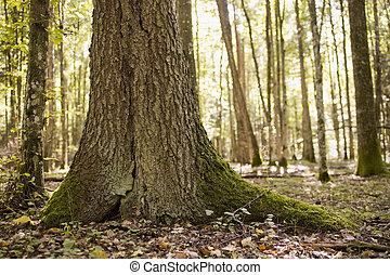 trunk of big tree