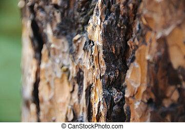 Trunk of pine-tree