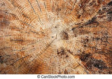 Trunk - Closeup of a cut tree trunk