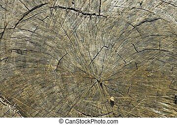 Trunk - Old, cut tree trunk texture
