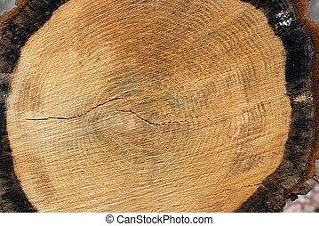 Trunk - Tree trunk texture