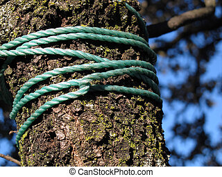 Trunk tied with ropes