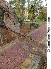 unusual old tree