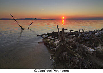 Trunks of dead wood on the shore of a huge lake