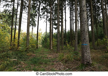 Trunks of trees in a coniferous forest