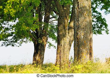 Trunks of Trees