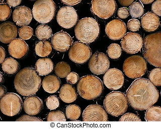 Trunks - Timber in a forest