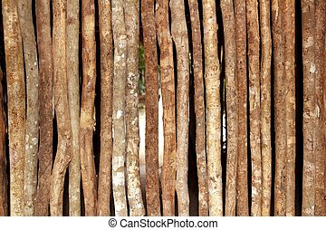 trunks wooden wall in rainforest jungle house pattern...