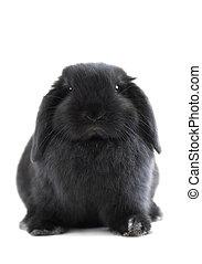 trusia królik
