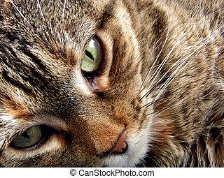 Trust - Close-up of reclining cat