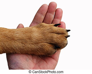 Trust - The paw of a dog lies in a hand of the person. The...