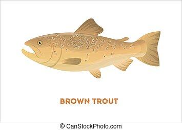 truta marrom, isolado, fish.