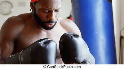 tryb, samiec, bokser, agresywny, 4k, stosowność, studio