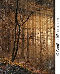 trylleri, sunbeams, ind, den, skov