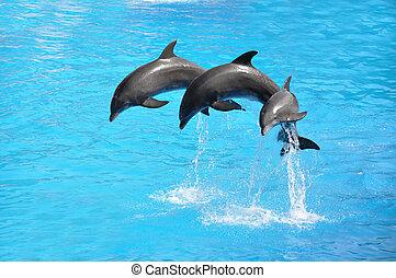 trzy, delfiny