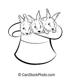 trzy, ilustracja, rabbits., wektor, magik, kapelusz