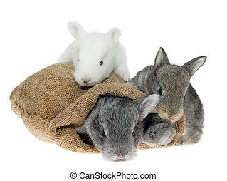 trzy, mały, króliki, w, przedimek określony przed rzeczownikami, torba