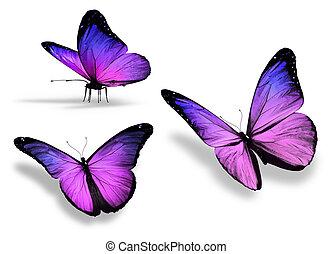trzy, odizolowany, tło, fiołek, biały, motyl