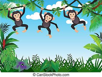 trzy, szympans