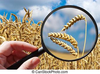 tsjech, -, akker, ecologisch, corny, landbouw, landbouw