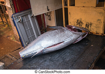 tsukiji, japonia, tuńczyk, tokio, fishmarket