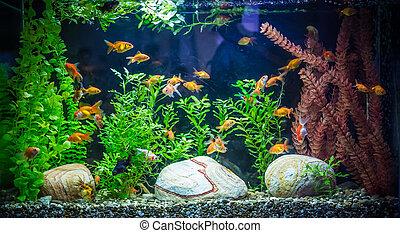 ttropical, de agua dulce, acuario, con, peces