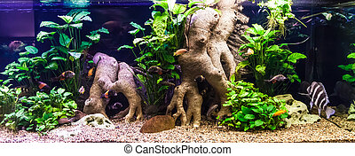 Ttropical freshwater aquarium with fishes - A green ...