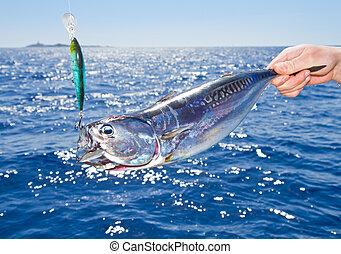 tuńczyk, gra, śródziemnomorski, wędkarski, cielna