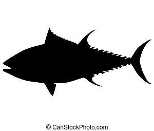tuńczyk, sylwetka