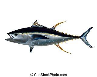 tuńczyk, yellowfin