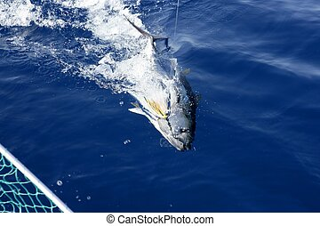 tuńczyk, zwolnić, błękitny, płetwa, śródziemnomorski, wędkarski