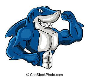 tubarão, músculo