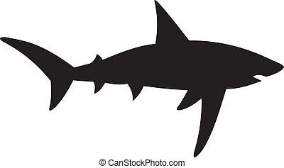 tubarão, vetorial