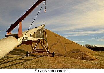 Tube grain elevator transfers soybeans
