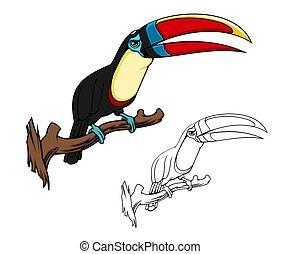 tucán, cidra, throated, pájaro, mascota, tropical
