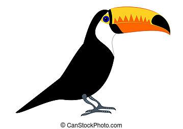 Tucan - A isolated tucan bird