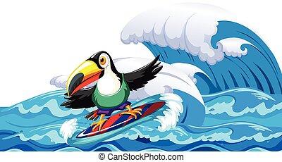 tucano, surfando, onda grande