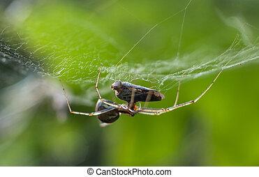tueur, araignés