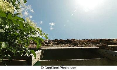 tuiles, vieux, toit