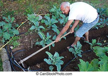 tuin, bejaarden, groente, farmer, bloemkolen, hoeing, grond