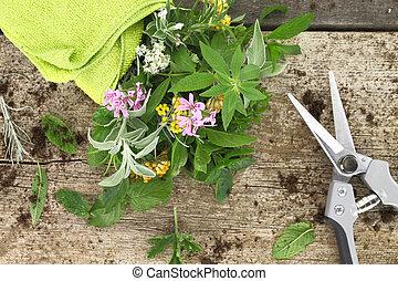 tuin, keukenkruiden, houten, scissor, achtergrond, fris, bos