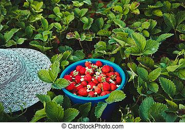 tuin, kom, aardbei, achtergrond, fris, besjes